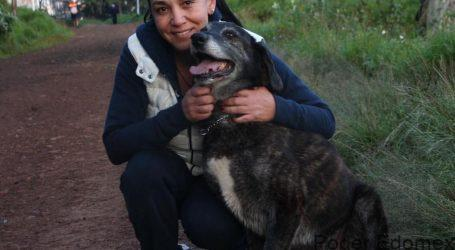Metepec comprometido con el bienestar animal: Gabriela Gamboa Sánchez