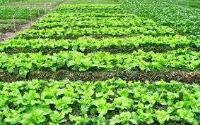 Cambios en la estacionalidad del clima afectan distribución y rendimiento de especies vegetales