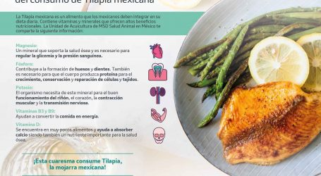 La Tilapia mexicana, una excelente opción para disfrutar en cuaresma