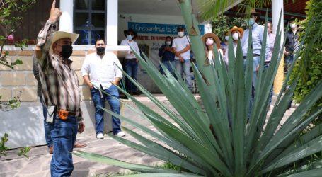 MUESTRAN PRODUCTORES TRADICIÓN MEZCALERA EN EL EDOMÉX